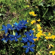 Sommerferien Blumen blau gelb
